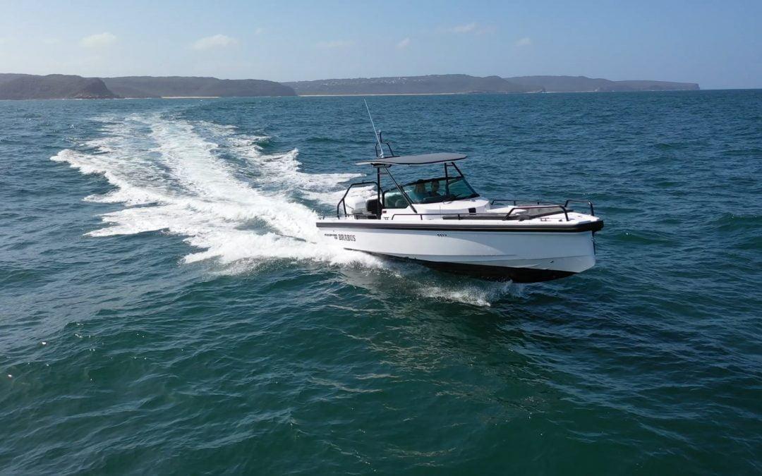 Sea Life Spotting Axopar Adventure